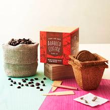 grow own coffee