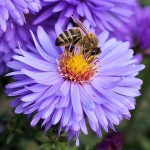 bee-flower-pollen-color-65656